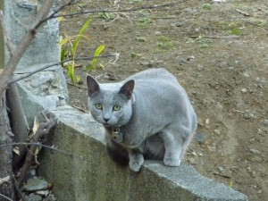 マンションの裏に来るマイペースなネコ.飼い猫みたい.